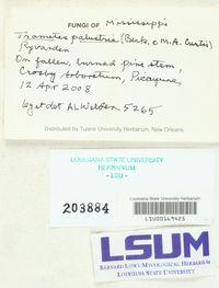 Fomitopsis palustris image