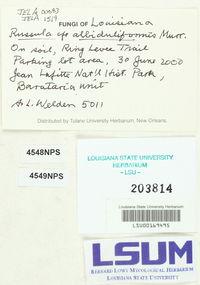 Russula albiduliformis image