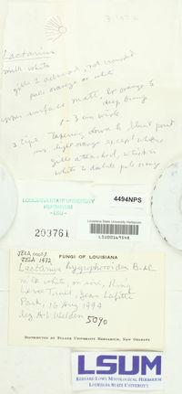 Lactarius hygrophoroides image