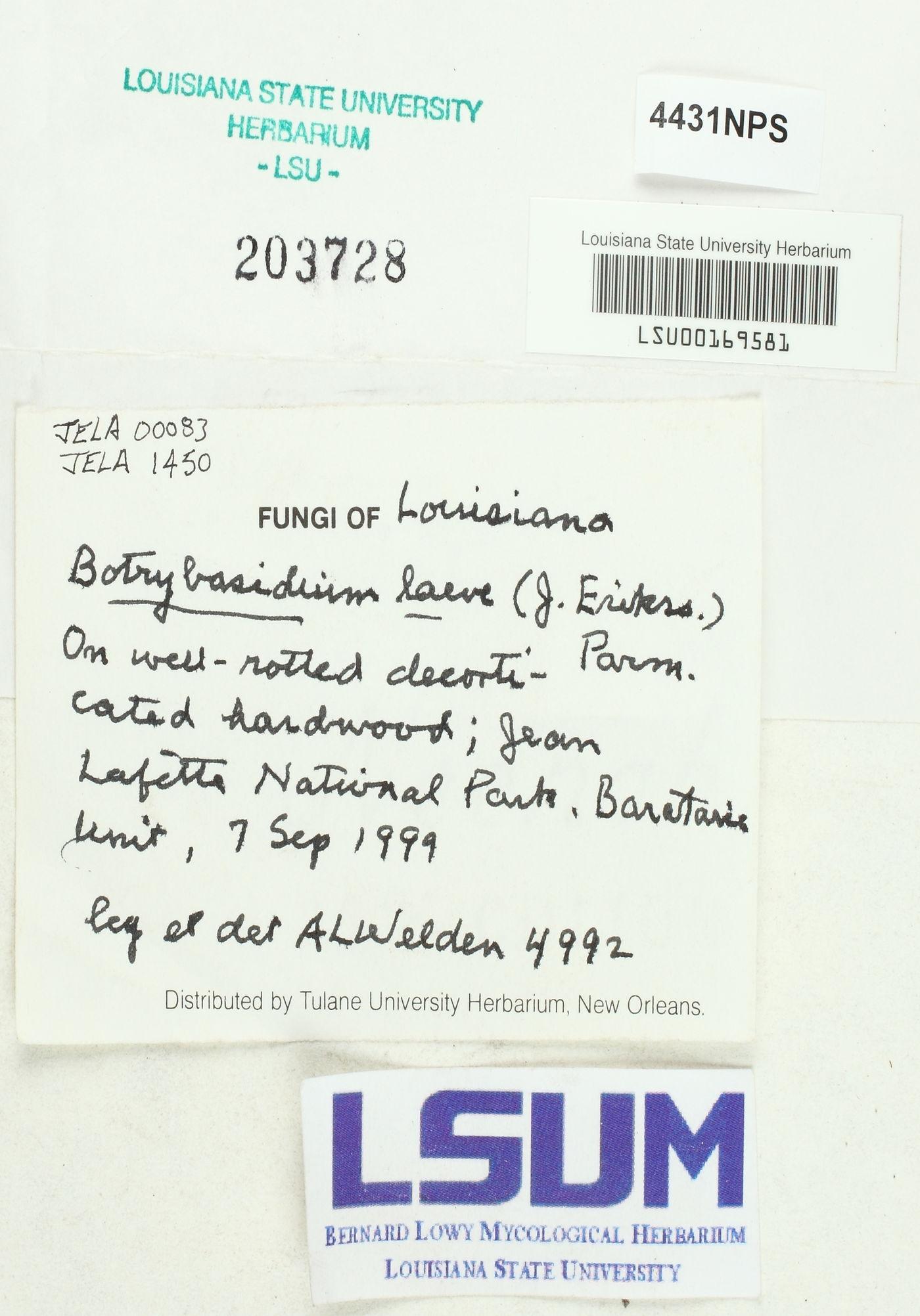 Botryobasidium laeve image
