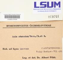 Mycoacia stenodon image