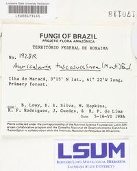 Auricularia fuscosuccinea image