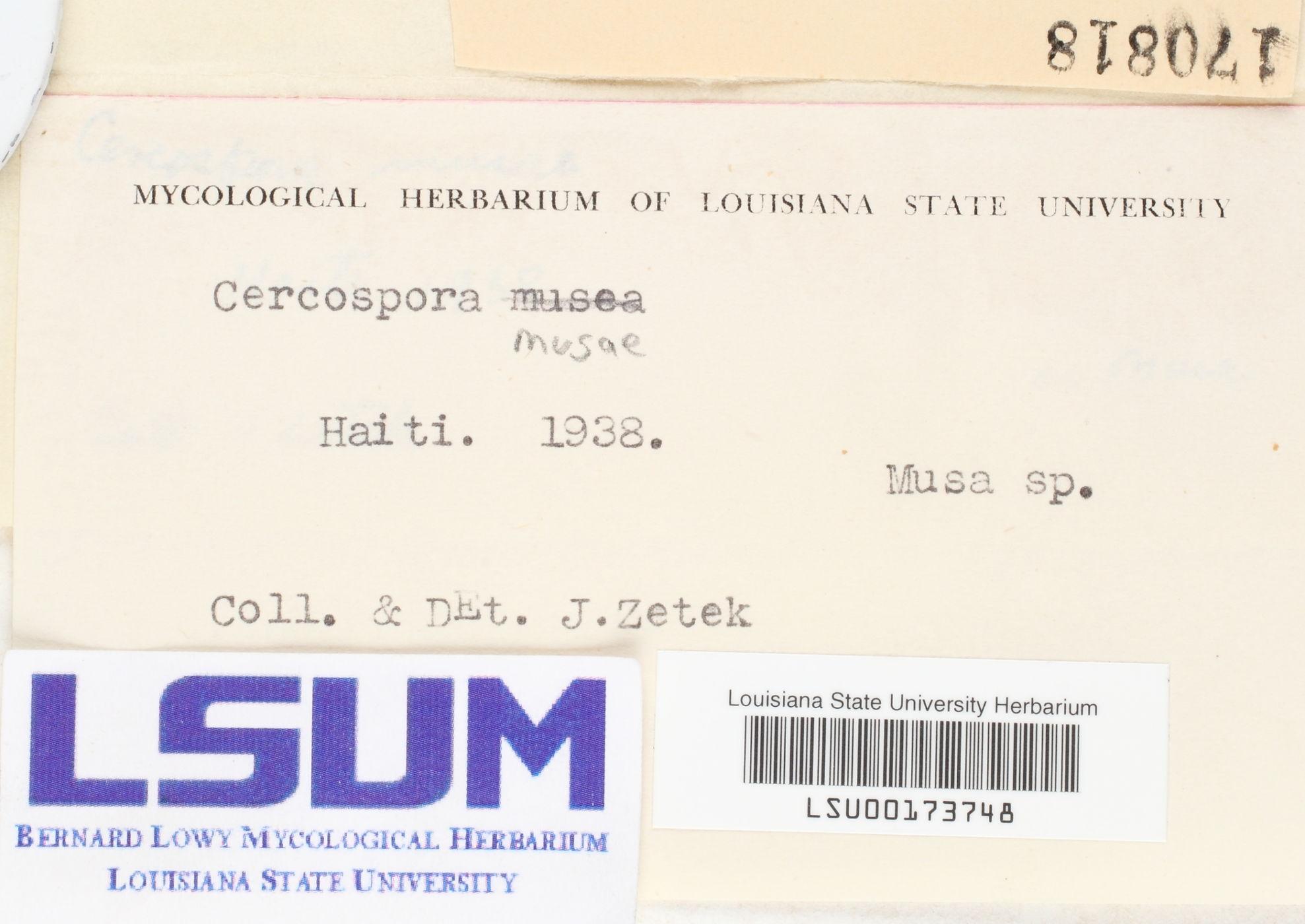 Mycosphaerella musicola image