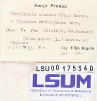 Fomitopsis annosus image
