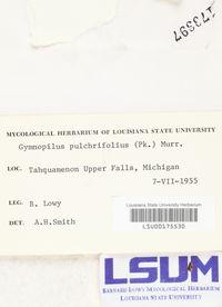 Gymnopilus pulchrifolius image