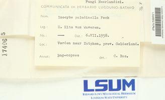 Inocybe paludinella image