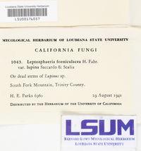 Leptosphaeria foeniculacea image