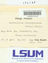 Lachnellula chrysophthalma image