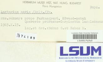 Lactarius acris image