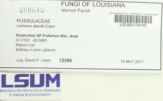 Lactarius allardii image