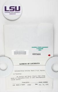 Anisomeridium subprostans image