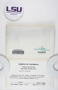 Buellia disciformis image