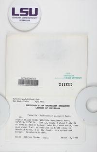 Bulbothrix scortella image