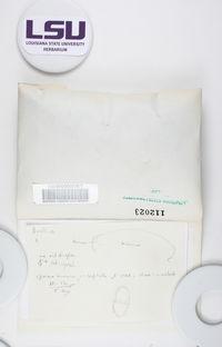 Buellia erubescens image