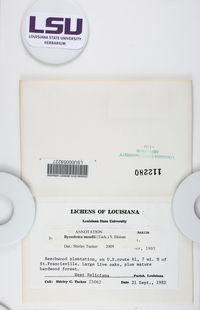 Byssoloma meadii image