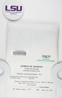 Canoparmelia cryptochlorophaea image