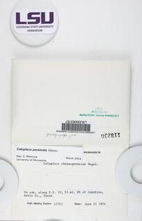 Gyalolechia persimilis image