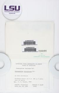 Coenogonium interplexum image