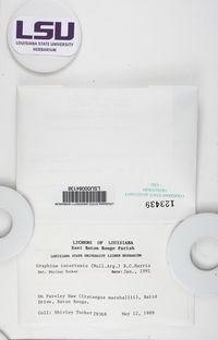 Acanthothecis gracilis image
