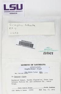Graphis librata image