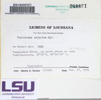 Thelotrema adjectum image