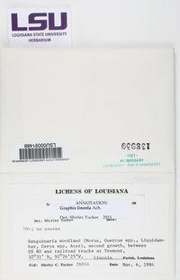 Graphis lineola image