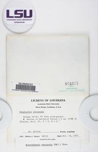 Heterodermia obscurata image