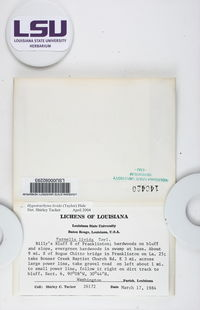 Hypotrachyna subgen. Hypotrachyna image