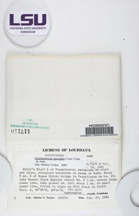 Hypotrachyna osseoalba image