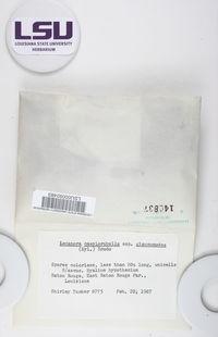 Lecanora caesiorubella subsp. glaucomodes image