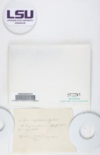 Lecanora imshaugii image
