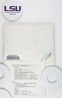 Lecidella euphorea image