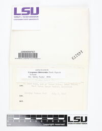 Cresponea chloroconia image
