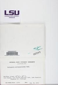 Lepra multipunctoides image