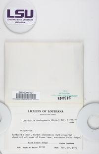 Letrouitia domingensis image