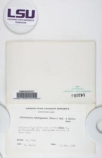 Letrouitia parabola image