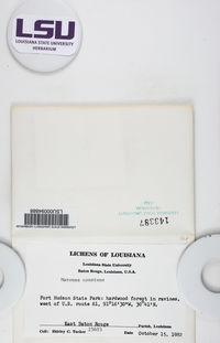 Maronea polyphaea image