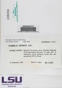 Punctelia rudecta image