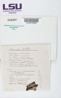 Zwackhia viridis image