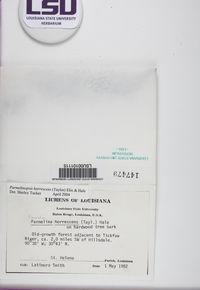 Hypotrachyna horrescens image