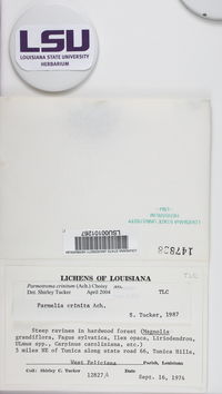 Parmotrema crinitum image