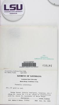 Parmotrema cristiferum image