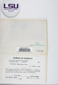 Parmotrema dominicanum image