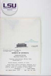 Parmotrema endosulphureum image