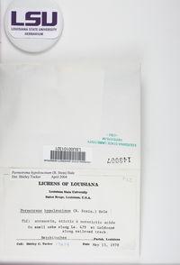 Parmotrema hypoleucinum image