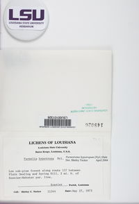 Parmotrema hypotropum image