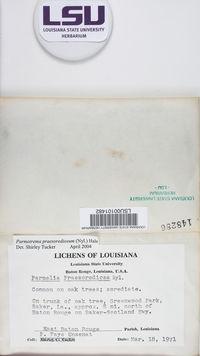 Parmotrema praesorediosum image