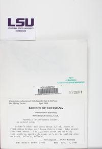 Parmotrema submarginale image