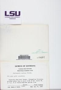 Lepra commutata image