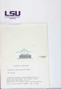 Lepra hypothamnolica image